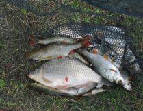 Więcej o: Zgotuj rybie smaczny finał
